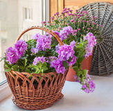 喇叭花和菊花在一个篮子在阳台窗口 免版税库存照片