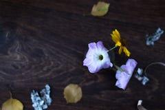 喇叭花在木背景的一个玻壳开花 免版税库存图片