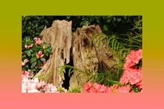 喇叭花桃红色玫瑰、黄色木黄水仙、蝴蝶花、snapdragon和万寿菊,美好的花绿草背景黑色白色 图库摄影