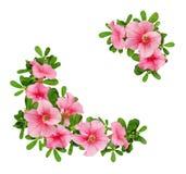 喇叭花花和叶子的壁角安排 免版税库存图片