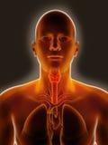 喉咙痛 库存图片