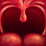 喉头悬雍垂 向量例证
