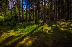 喜怒无常的晴朗的风景草甸在森林里在Jeseniky 库存图片