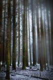 喜怒无常的森林场面 库存图片