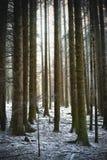 喜怒无常的森林场面 免版税图库摄影