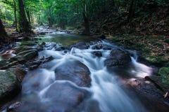喜怒无常的热带雨林sream 免版税库存照片