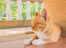 喜怒无常的猫 免版税库存照片
