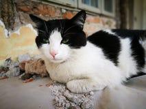 喜怒无常的猫 库存照片