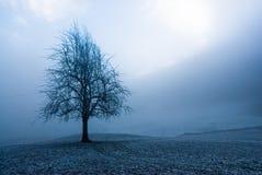 喜怒无常的结构树冬天 库存图片