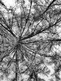 喜怒无常的结构树 免版税库存照片