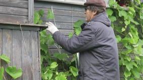 喜欢农场的一个葡萄园的一个年长人 股票视频