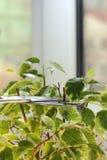喜欢植物 免版税库存照片