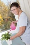 喜欢盆的植物的年长妇女 库存图片
