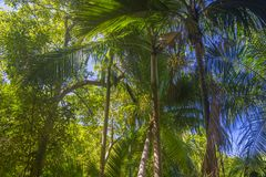 喜欢费迪南德自然储备,塞舌尔群岛 库存照片