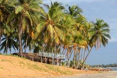 喜爱的冲浪者Â的酒吧在海滩的棕榈树下 免版税库存照片