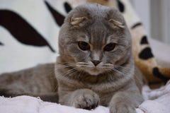 喜爱的家庭猫 免版税库存图片