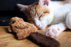 喜爱的猫薄荷玩具 免版税库存照片