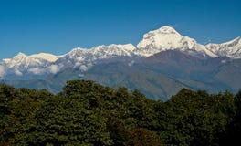 喜马拉雅山在清楚的天空下,与作为前景的绿色树 免版税库存照片