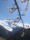 喜马拉雅山春天 库存图片
