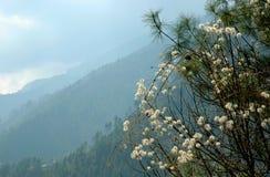 喜马拉雅山春天 免版税库存照片