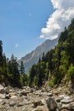 喜马拉雅山的山有杉树的 库存图片