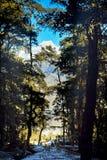 从喜马拉雅山的森林视图 图库摄影