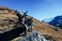 喜马拉雅山 库存照片