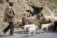 喜马拉雅牧羊人导致他的山羊和绵羊群 免版税库存照片