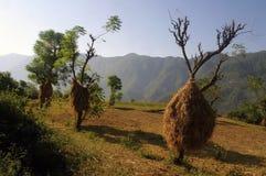 喜马拉雅的农业 免版税库存照片