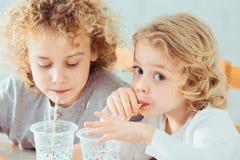 喝健康牛奶的兄弟姐妹 库存图片