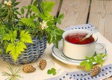 喝用森林草本的茶 免版税库存照片