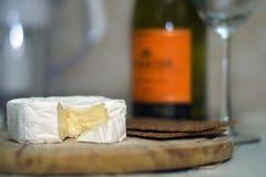 喝酒的乳酪 免版税库存图片