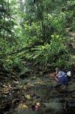 喝从小河的妇女在雨林里 库存图片