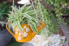 喷壶成为到花盆植物 库存图片