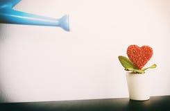 喷壶浇灌的爱对拉丁文的一朵红色花 库存图片