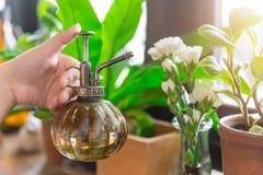 喷水植物的绿色室内花园 免版税图库摄影