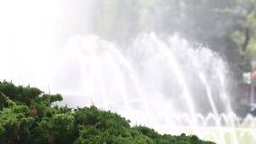 喷泉在城市公园被弄脏的背景中 股票录像