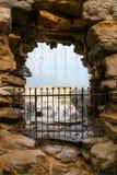喷泉在庭院里在美泉宫在维也纳,奥地利 免版税图库摄影