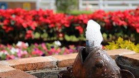 喷泉在庭院里 股票视频