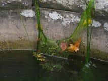 喷泉墙壁, 石工污染与生物杂质, 库存照片