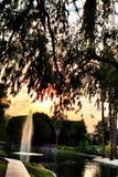 喷泉森尼韦尔加利福尼亚 免版税库存图片