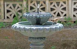 喷泉鸟 图库摄影