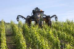 喷洒的杀虫药-葡萄园-法国 库存图片