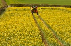 喷洒的油菜籽庄稼 免版税库存图片