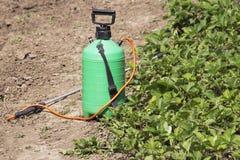 喷洒的肥料 手抽的喷雾器 使用在庭院的杀虫剂 喷洒草莓灌木在开花期间 库存照片