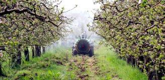 喷洒的苹果树在春天 库存图片