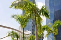 喷水隆头和棕榈树(新加坡) 免版税库存照片