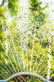 喷水隆头在绿色自然背景的,关闭夏天庭院里 免版税库存照片