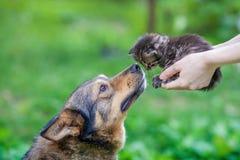 嗅一只小小猫的一条大狗 免版税库存图片