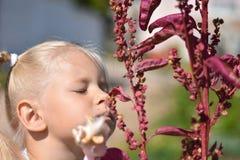 嗅一朵紫色花的小女孩反对绿色领域背景 图库摄影
